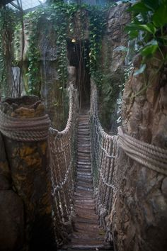 Bridge in the Rain Forest at the Henry Doorly Zoo in Omaha, Nebraska.This looks cool! Oklahoma, Wisconsin, Kansas, Ohio, Michigan, Nebraska Omaha, Oh The Places You'll Go, Places To Travel, Places To Visit