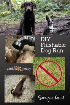 Build a DIY Flushable Dog Run and Save Your Lawn! Diy Dog Run, Diy Dog Yard, Dog Run Side Yard, Dog Training, Training Tips, Building A Dog Kennel, Dog Backyard, Dog Friendly Backyard, Wedding Backyard