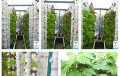 Vertical Aquaponics   Aquaponic Gardening