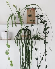 Charming Hanging Plants ideas to Brighten Your Patio – Gardening Decor