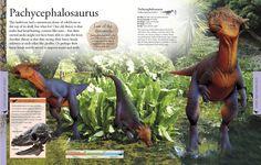 Dinosauriomanía, lo que querías saber de los dinosaurios: Libro recomendado: Dinosaurs a visual encyclopedia