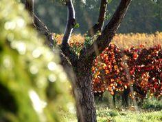 Château Rêva - Vins des Maures, de Provence, de pays du Var et Côtes de Provence