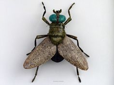 Insect ceramics by Reinhard Schuldt
