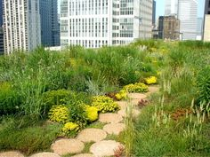 http://www.greenroofs.com/projects/chichall/chichall9.jpg