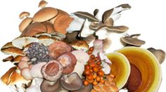 We specialize in providing organic mushroom home growing kits and a wide variety of specialty mushrooms. We are a certified organic, full spectrum spawn and mus
