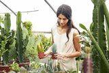 How to Grow Healthy Succulent Plants ~ via HousePlants.about.com/od/growinghealthyhouseplants/a/SucculentsBasic.htm