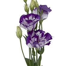lisianthus flower - Google Search
