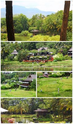 Gorgeous views of the @Four Seasons Resort Chiang Mai via @Lazy Travelers