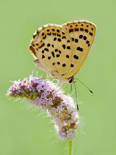 Butterfly by Soheil Shahbazi on 500px