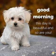 This is a beautiful Day & so are you! cute positive dog puppy great good morning good morning beautiful good morning photo positive post