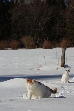 雪の中 散歩