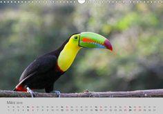 Costa Rica - Exotische Vögel im Regenwald - CALVENDO Kalender von Ursula di Chito