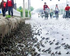 A knot of toads. Here, thousands of toads were spotted at a bridge in Taizhou, Jiangsu province, China, on May 9, 2008.
