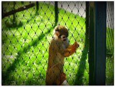 *** Es gibt ein Leben....außerhalb*** Image, Reflex Camera, Life, Animales