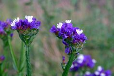 You asked for it and you got it: a list of the most-loved perennials for Zone 3. These perennials are the stars of the garden, blooming year after year and delighting their owners every time. Pick these winners up at your nearest garden centre, or ask a friend with a more established garden if …