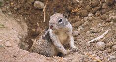 Perchè gli scoiattoli si agitano per niente? http://goo.gl/ERurvR