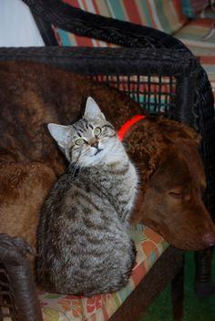 Stray kitten shows up and makes a new best friend. Chesapeake Bay, Cbr, Farms, Best Friends, Kitten, Autumn, Animals, Beat Friends, Cute Kittens