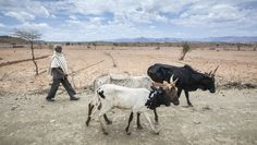 Time is ripe to predict drought to help African farmers