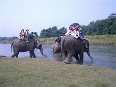 Elephant riding  Chitwan Jungle Safari- Nepal.