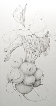 CONTEMPORARY BOTANICAL ART in oil, watercolor, graphite, colored pencil, pen and ink