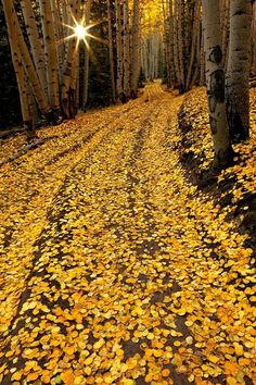 SEASONAL – AUTUMN – a scenic pathway surrounded by the brilliant colors of fall in aspen, colorado, photo via theopal.