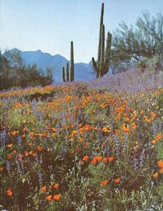 Floral desert