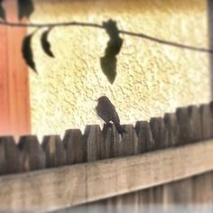 Spring showed up outside one of my kitchen windows.#spring #home #birds #happy #funny #peeps - @marianegreer- #webstagram