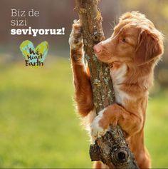 Hayvanlar ile ağaçlar arasındaki dostluğa bayılıyoruz. Çünkü biz de onları çok seviyoruz. www.hibboux.com  #doğa #dostluk #instapic #instaphoto #weekend #dog #yeşil #yeşilikoru