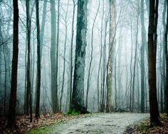 Pathway into Fog black brown trees fog woodland by joystclaire, $25.00
