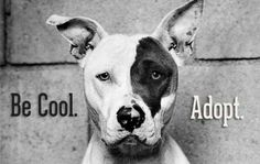 Be Cool. Adopt.