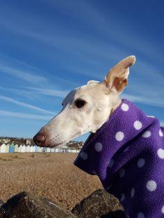 Peggy   Dog walkers St Leonards, Hastings, Fairlight, Bexhill, St Leonards-on-sea  Best dog walking services   Www.Hastingspetcare.Co.Uk   Dog walk