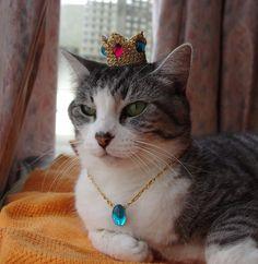 Princess Peach Hat for Cat + pendant