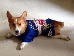 Tubby from Singapore (Submitted from Facebook)