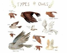 Different type owls