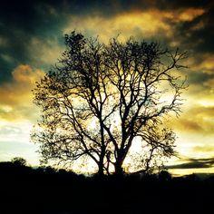 Erm....a tree :)
