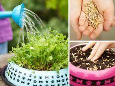 DIY Pet Grass