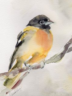 Oriole Bird Painting Original Watercolor Painting by CanotStop