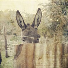 nothing better than donkey ears...