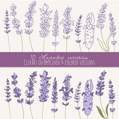 Lavender Sprigs Clip Art // Photoshop Brushes // by thePENandBRUSH
