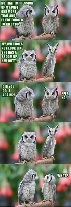 Funny owls - I laughed out loud when I scrolled down to read the captions and see all the photos.  Brilliant, whoever did this.