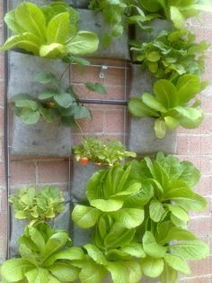 Huerto vertical con aromaticas y riego automatico Plant Decor, Plants