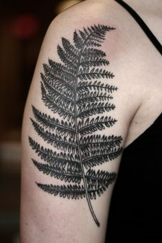 Alice Carrier | Got some healed photos of Flannery's fern after...