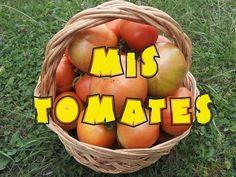 Mis tomates, cultivo y cuidados (tuhuertofacil.es) - YouTube