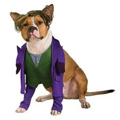 sc 1 st  Pinterest & Jockey Rider Pet Costume | Pinterest | Pet costumes