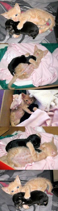A Kitten & Puppy Friendship
