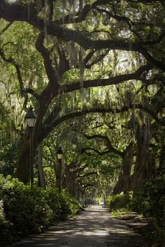 Southern Charm and Spanish Moss-how 'bout this for the driveway?! so pretty