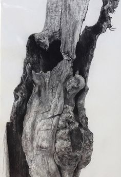 Charcoal Drawing Tips Miguel Angel Oyarbide on Behance - Landscape Drawings, Cool Landscapes, Landscape Art, Landscape Paintings, Botanical Art, Botanical Illustration, Tree Drawings Pencil, Contour Drawings, Drawing Faces