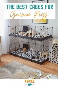 Guinea Pig Hutch, Guinea Pig House, Baby Guinea Pigs, Guinea Pig Care, Bunny Cages, Rabbit Cages, Indoor Guinea Pig Cage, Cages For Guinea Pigs, Pig Habitat