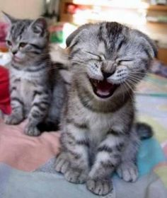 Cat Just Farted cute animals cat cats adorable animal kittens pets kitten funny quotes funny pictures funny animals funny cats funny jokes Funny Animal Quotes, Cute Funny Animals, Funny Animal Pictures, Animal Memes, Funny Cute, That's Hilarious, Funny Photos, Cat Quotes, Monkey Pictures