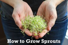 How to Grow Sprouts | One Hundred Dollars a Month